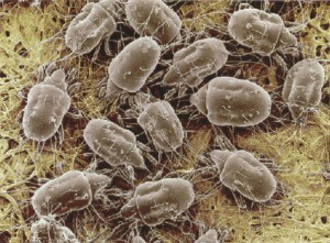 Reducing Dust Mites In Your Home Aqualux Carpet