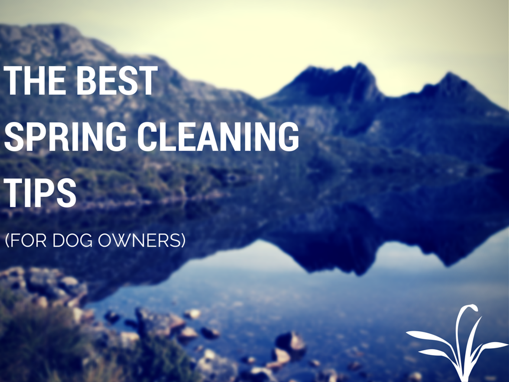 Best Spring Cleaning Tips the best spring cleaning tips (for dog owners) - aqualux carpet